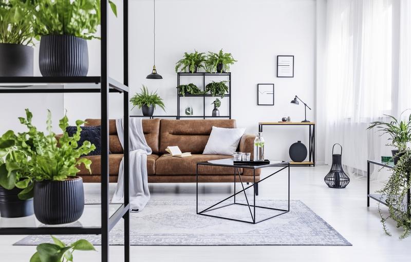 grote-kamerplant-kopen