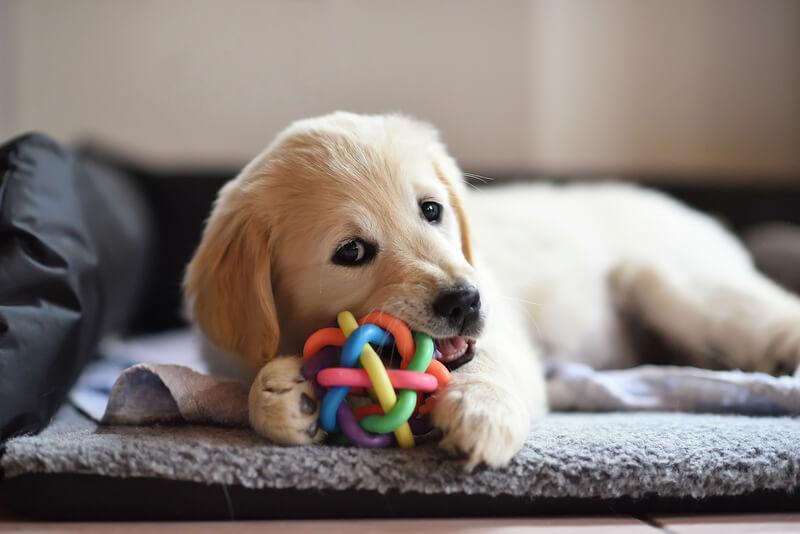 hondenspeeltjes