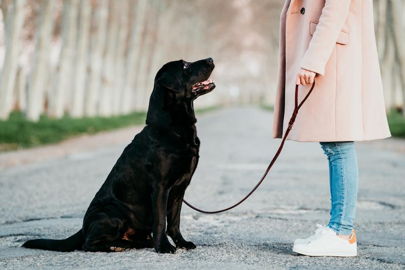 kies-een-hond
